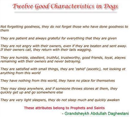 twelve characteristics of dogs